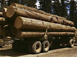 AFPA forecasts brighter prospects for forestry sector