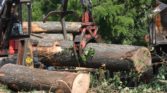 Global sawlog prices witnessed major decline during 3Q/14
