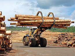 New Zealand emerged as the top softwood log exporter in 2013, says WRI