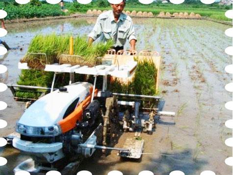 Walking Type Rice Transplanter